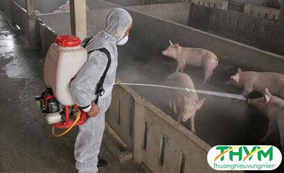 Phòng bệnh cho vật nuôi vào mùa đông